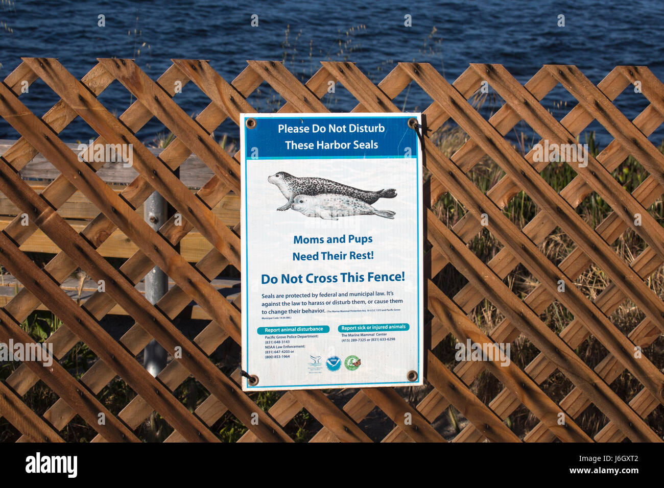 Les phoques de la baie de Monterey et barrière signe Photo Stock