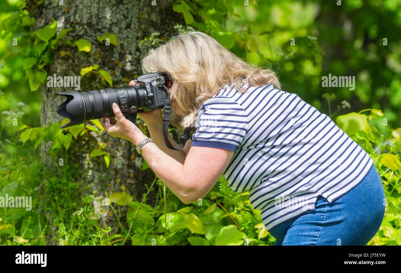Femme photographe en utilisant un objectif long et appareil photo en été dans la campagne britannique. Photo Stock