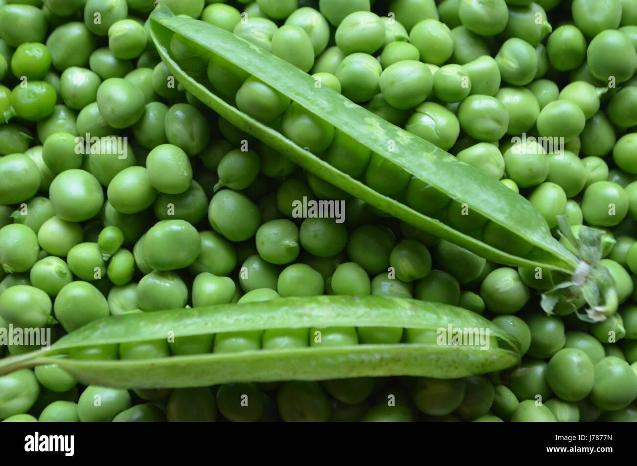 Les gousses de pois verts Photo Stock