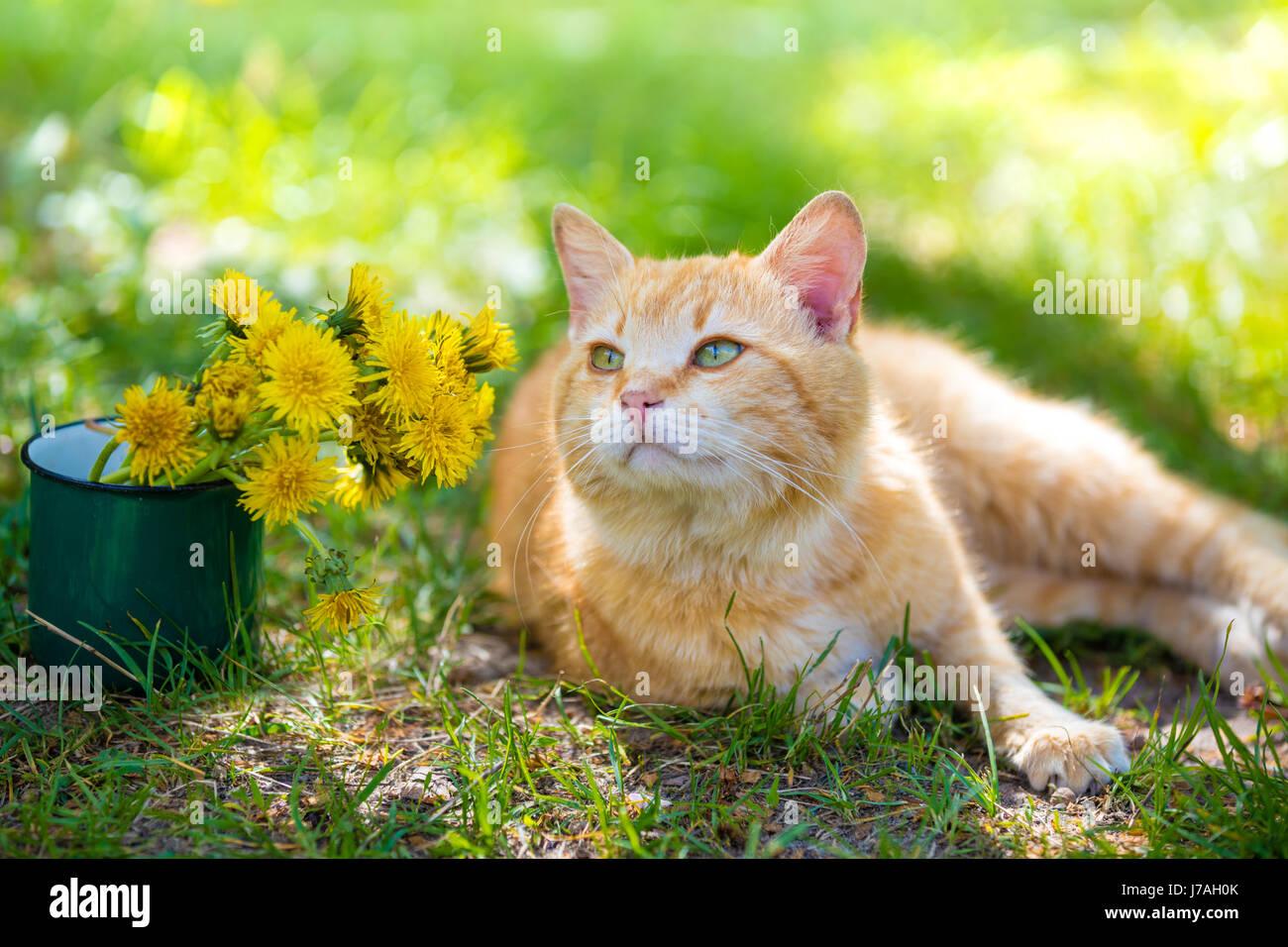 chat roux allong sur une herbe avec bouquet de fleurs de. Black Bedroom Furniture Sets. Home Design Ideas