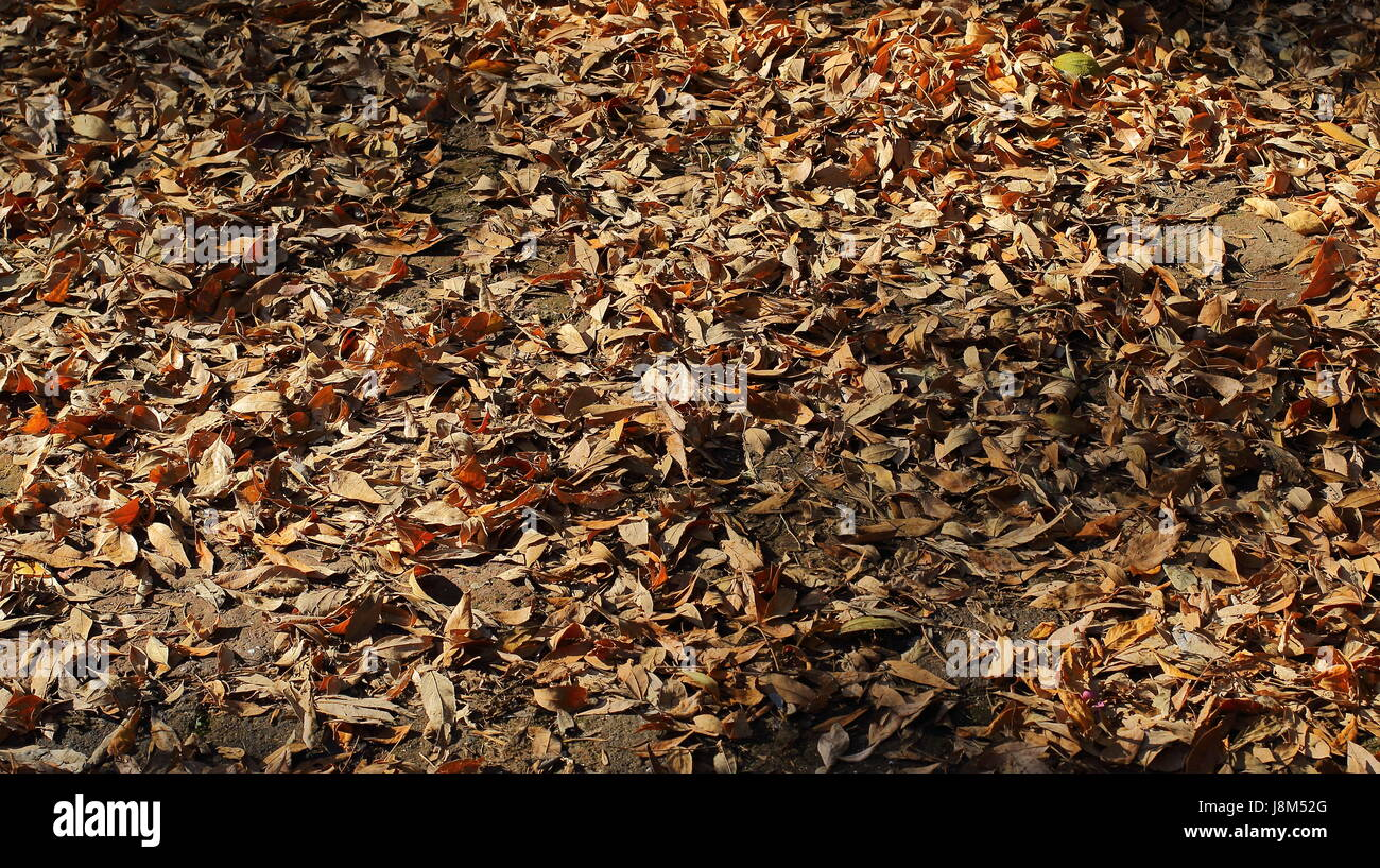 Jeter les feuilles d'automne Photo Stock