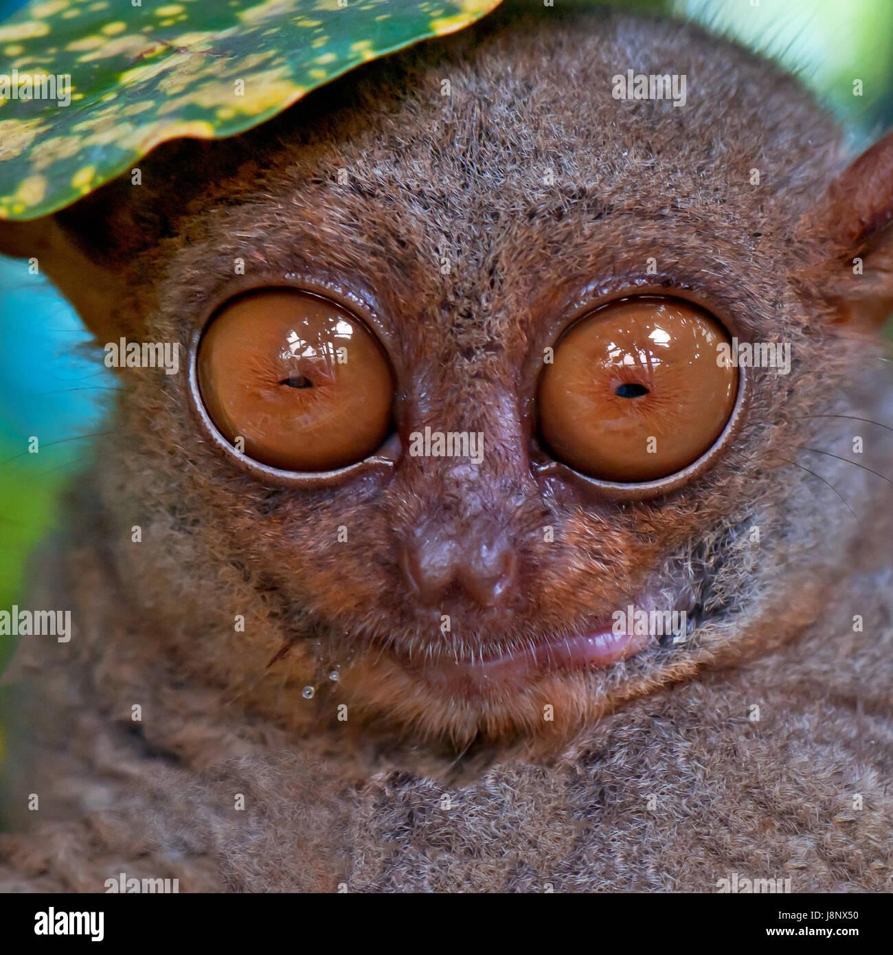 Animal, sauvage, singe, drôle, doigt, voyage, gros, grand, énorme, extrême Photo Stock - Alamy