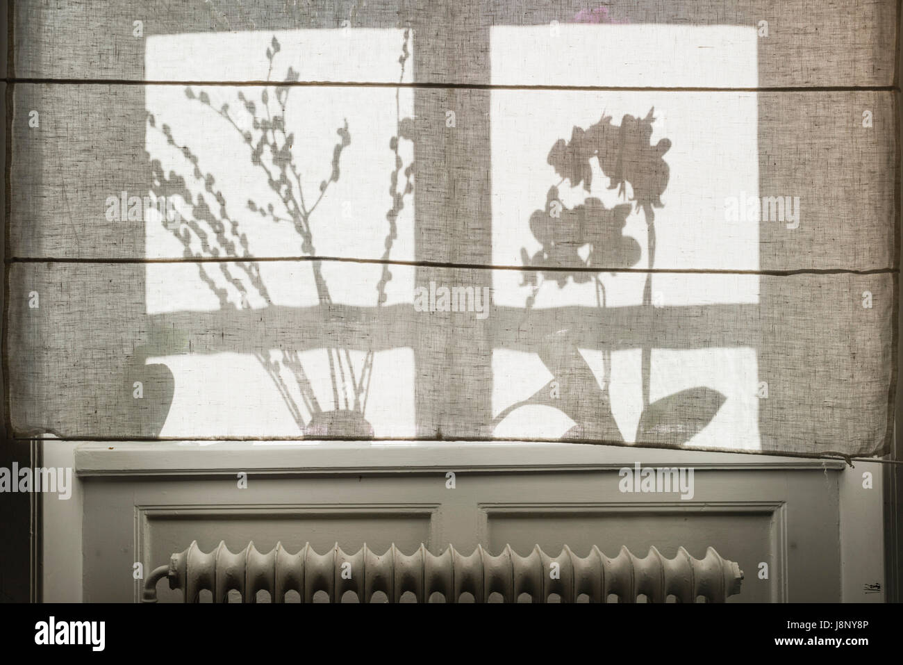 Silhouettes de rideau derrière les plantes Banque D'Images