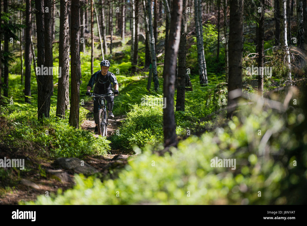 Man riding bicycle in forest Banque D'Images