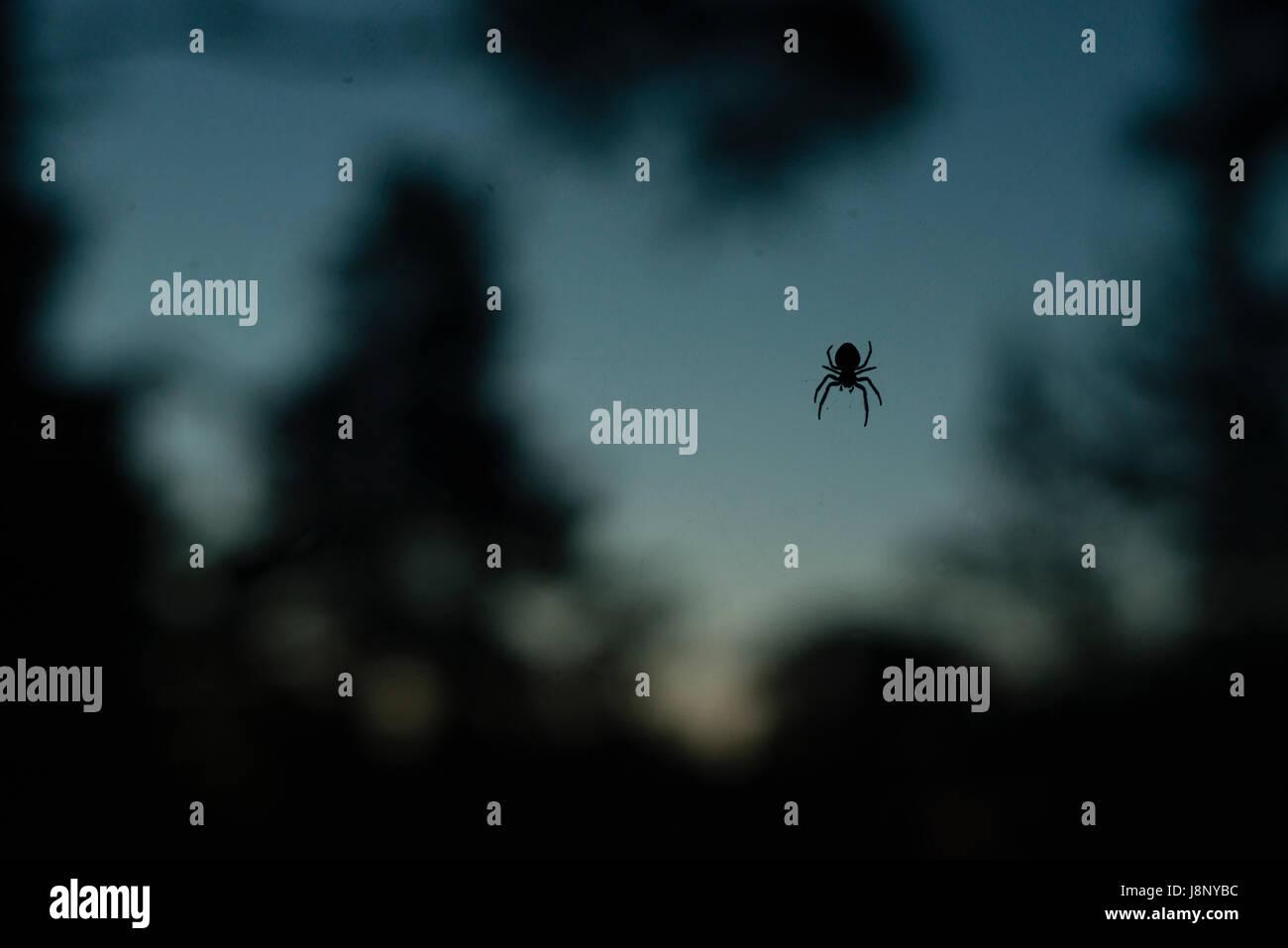 Silhouette d'araignée Banque D'Images