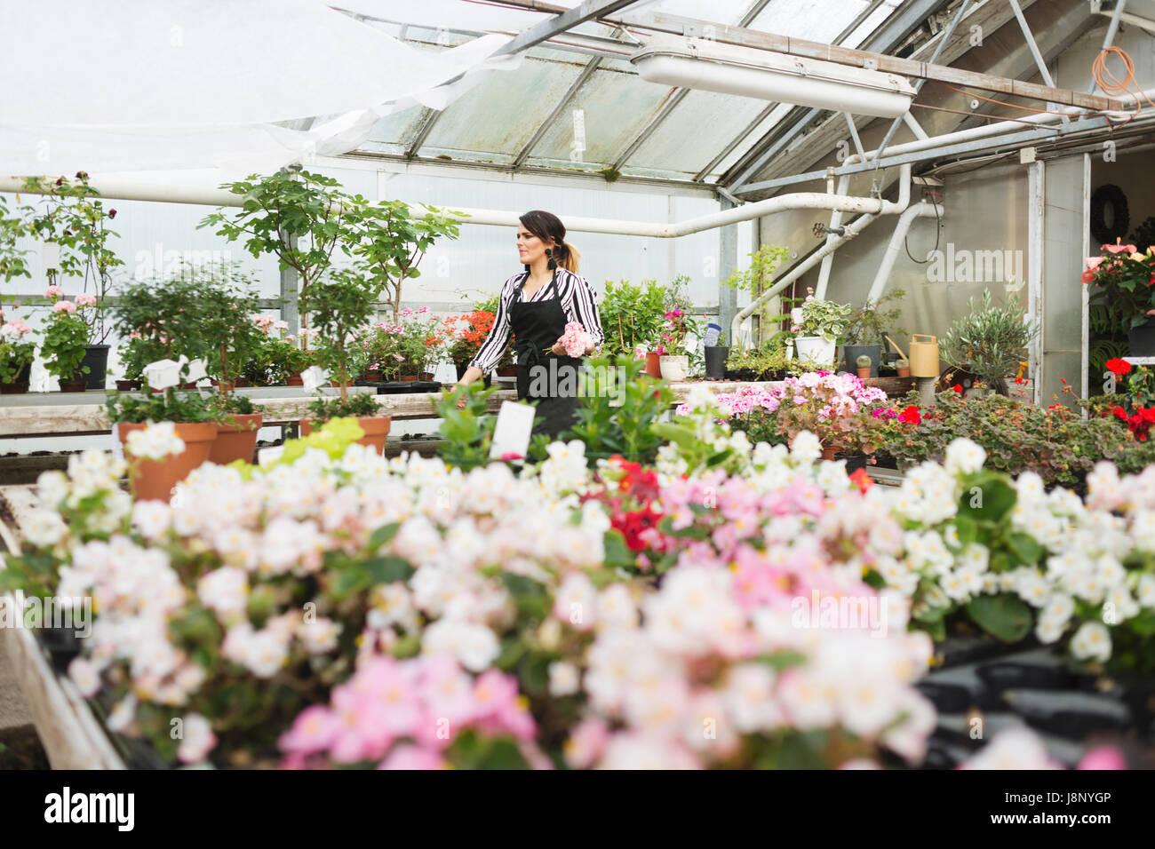 Dans le magasin de fleurs fleuriste Banque D'Images