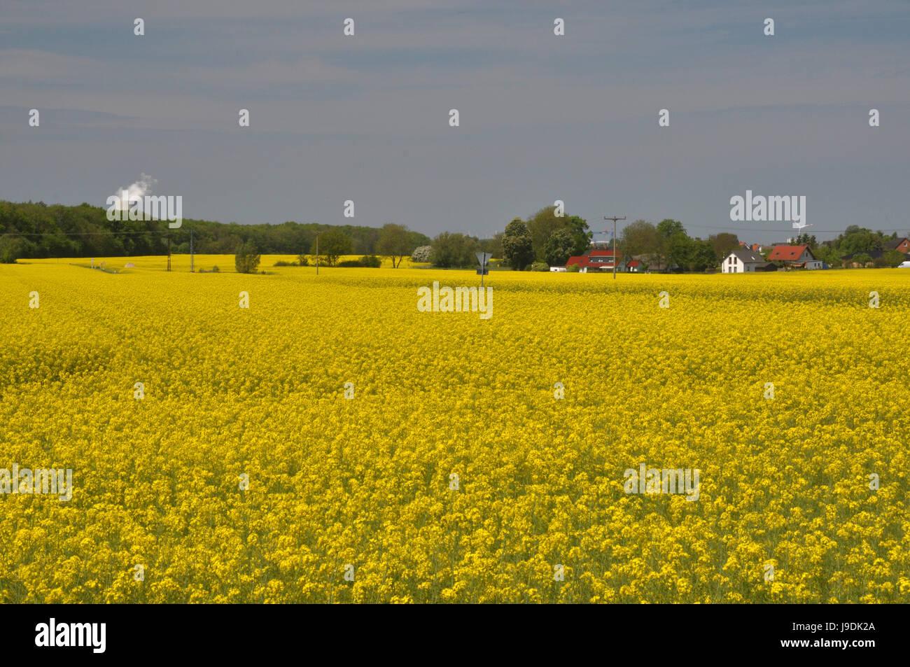 Bloom, agraire, s'épanouir, de s'épanouir, en plein essor, tour de refroidissement, coleseed, Banque D'Images