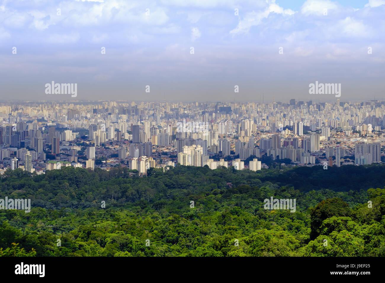 Sao Paulo de la forêt tropicale atlantique à Serra da Cantareira state park Photo Stock