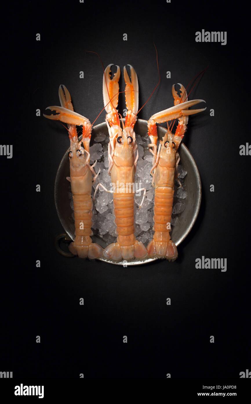 Les homards crus frais sur la glace, vue du dessus tourné sur fond noir, la technique d'éclairage. Banque D'Images