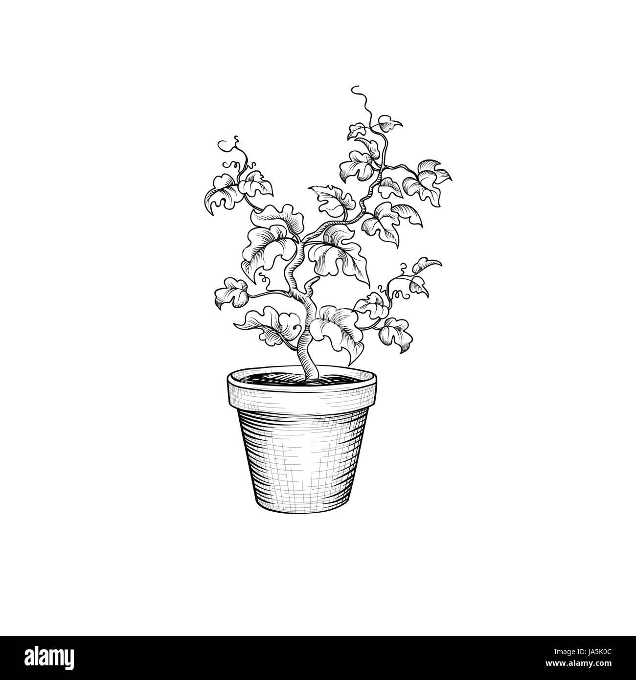 pot de fleurs décoratif. isolé. bonsai plante avec des feuilles de