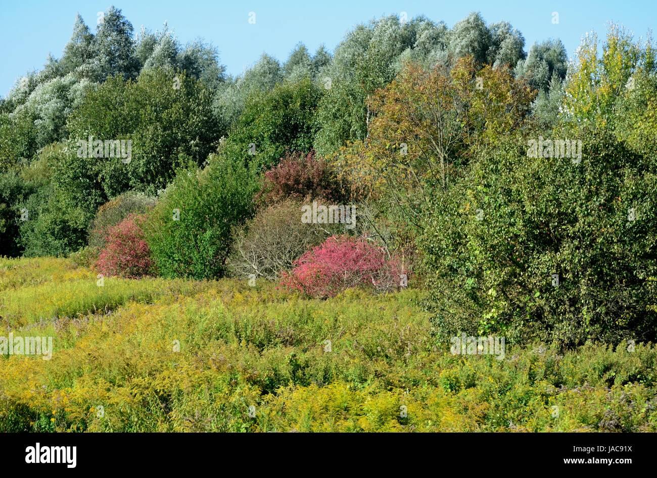 Sentier de l'automne sur le mur près de la Berliner Allee à Berlin - spandau Photo Stock