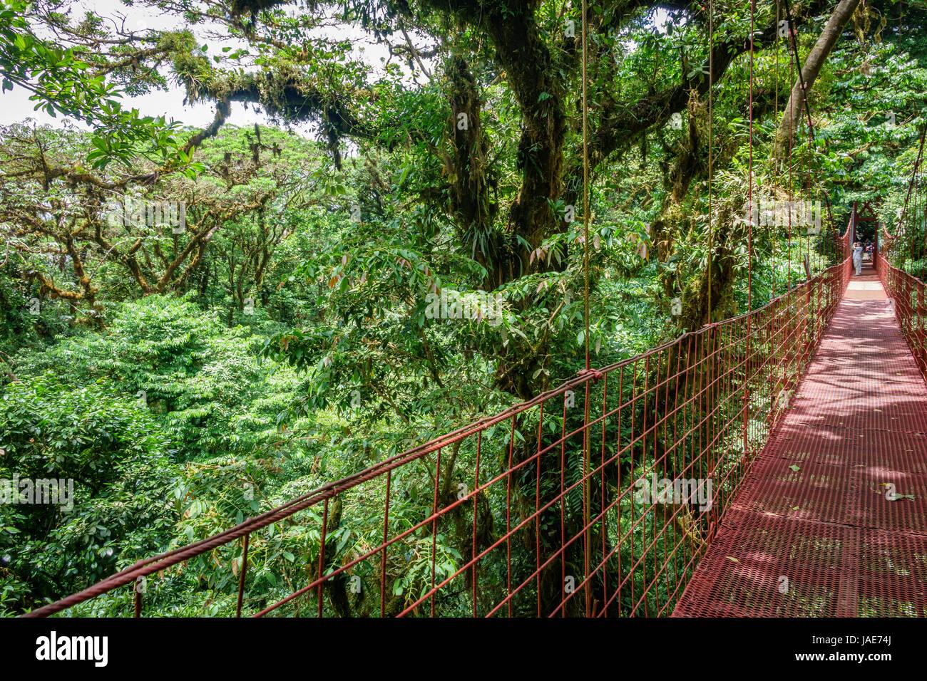 Vue grand angle du pont suspendu rouge dans la forêt tropicale de Monteverde au côté droit de l'image Photo Stock
