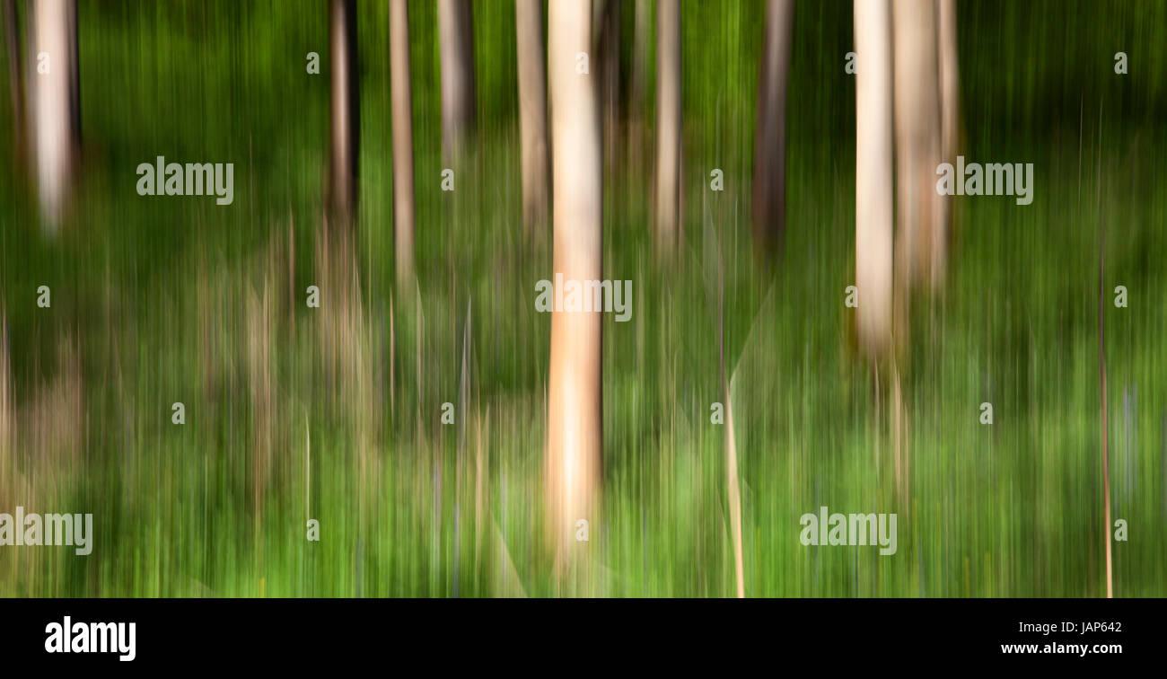 ICM, appareil photo en mouvement intentionnel de la SRCFA, Woods, Bolton Abbey Estate, Wharfedale, Yorkshire Dales Banque D'Images