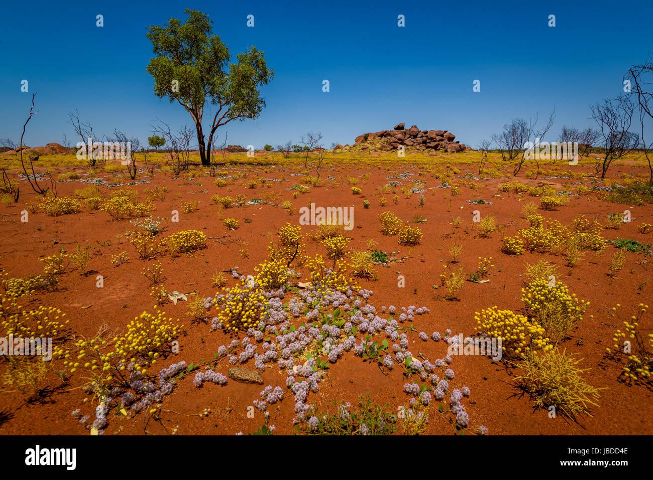 Gamme de fleurs Bloom au Parry, Australie occidentale Photo Stock