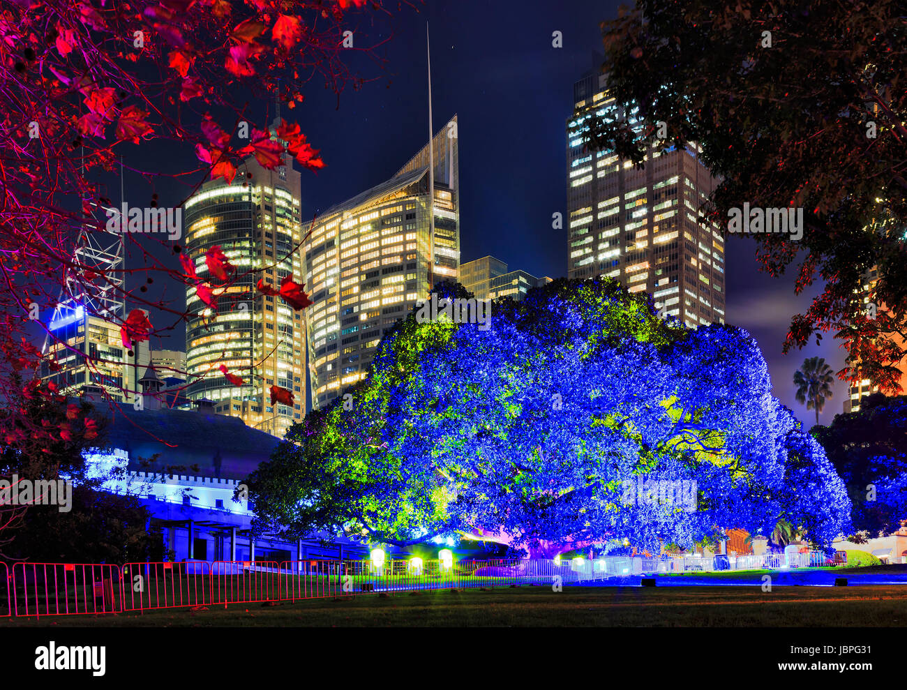 Royal Botanic Gardens Sydney big tree éclairées en lumière bleue contre CDB tours gratte-ciel Vivid Photo Stock