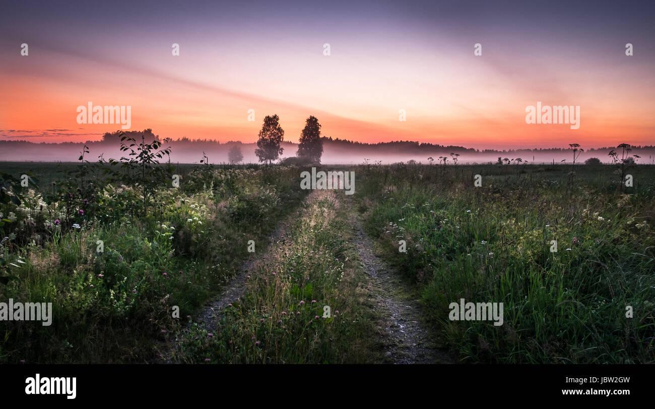 Paysage avec chemin idyllique et brouillard au soir d'été en Finlande Photo Stock