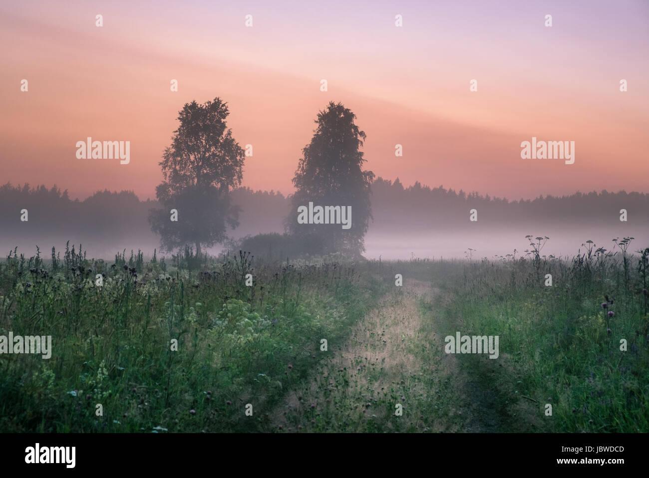 Paysage avec la brume et le brouillard à une nuit d'été dans le nord de l'Europe Photo Stock