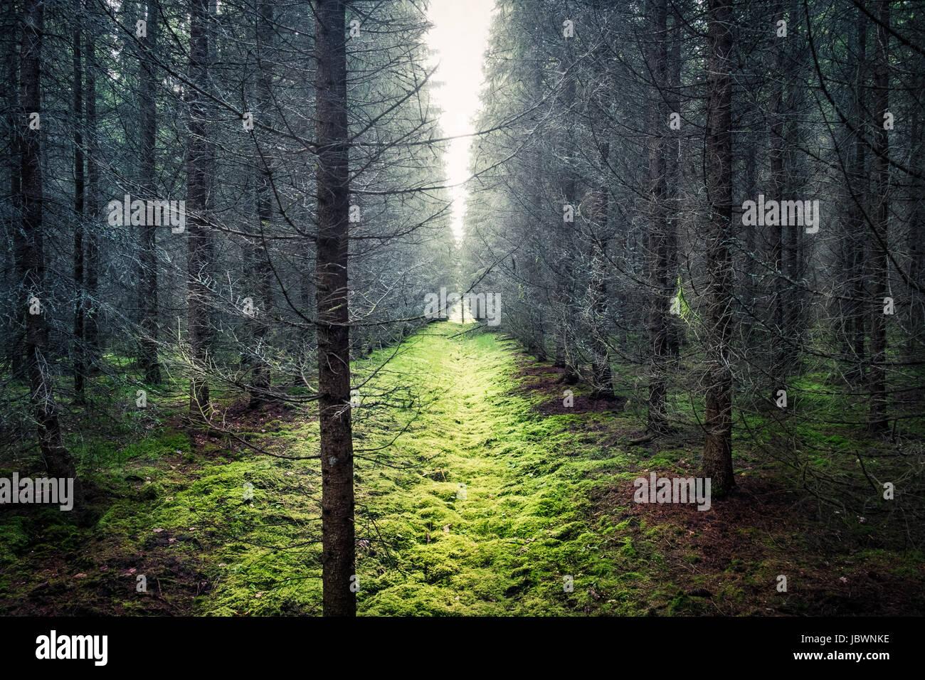 Paysage pittoresque avec une lumière vive et de forêt sèche Photo Stock