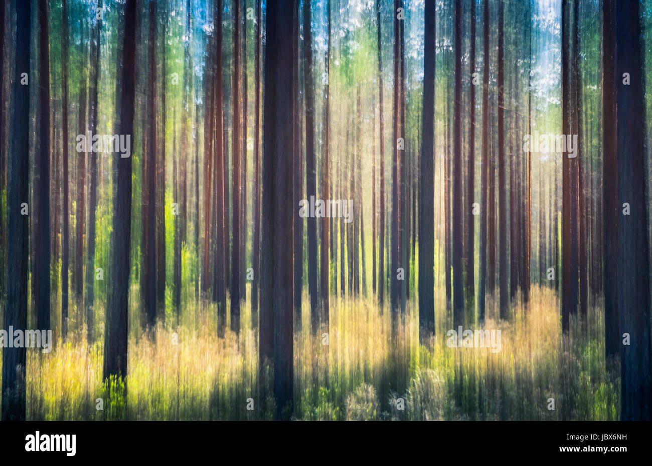Whispering trees. Cet effet a été faite en balançant l'appareil photo. Cela a été pris Photo Stock