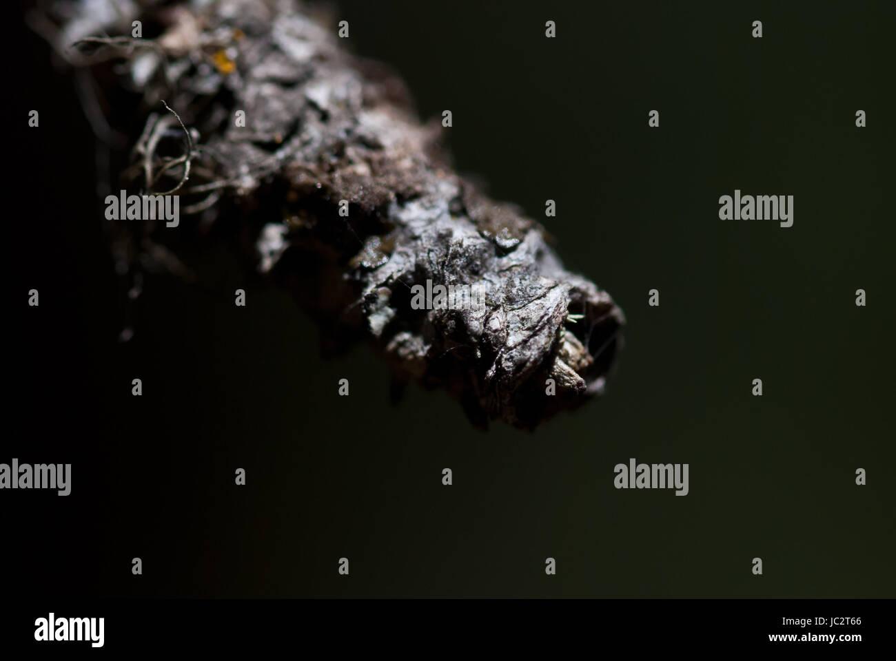 Nature's Abstract - Pointe de branche morte déchiqueté Photo Stock