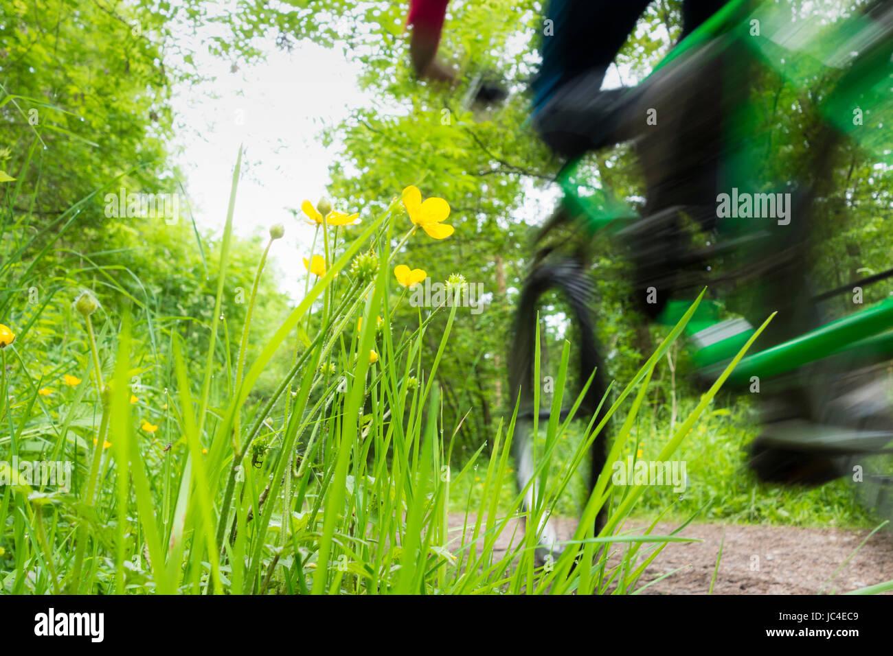 Du vélo de montagne sur Castle Eden passerelle, comté de Durham. UK Photo Stock