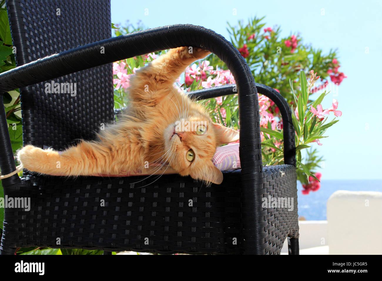 tabbyallongé Chat sur Chat Chat tabbyallongé une une domestiquegingembrered sur domestiquegingembrered tabbyallongé domestiquegingembrered sur roCeWQxBdE