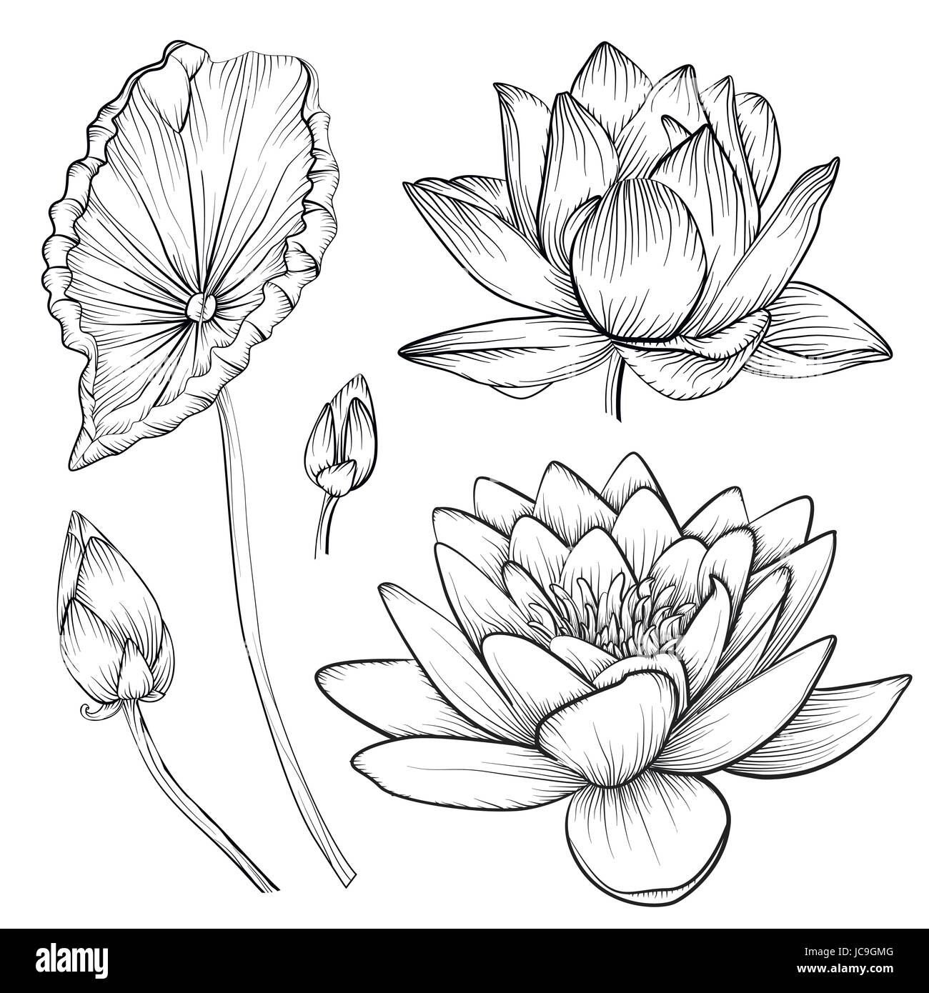 Vecteur Lotus Nenuphar Fleur Magnifique Boutons Jeu De Feuilles Ligne Noir Et Blanc L Art Du Tatouage L Illustration La Main Fine Fleur Plante Lineaire E Floral Image Vectorielle Stock Alamy