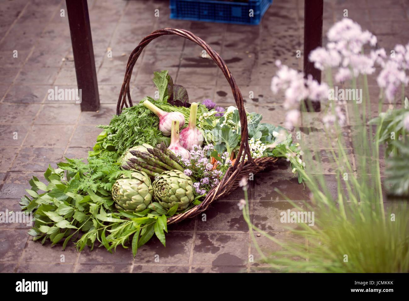 Panier de légumes fraîchement cueillis y compris les artichauts, l'ail et les asperges dans une serre Photo Stock