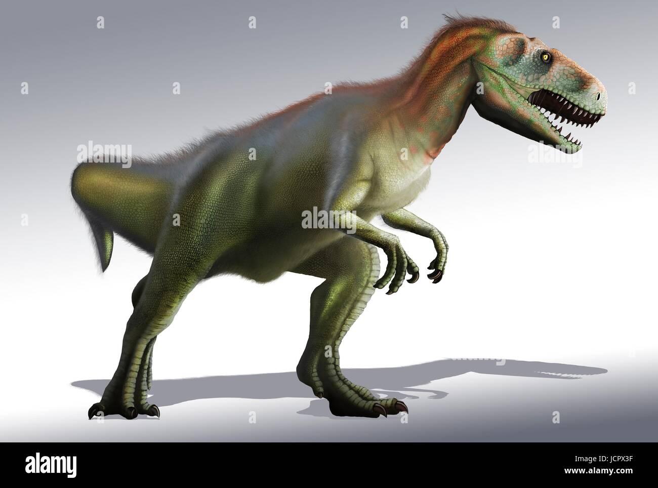 Megalosaurus est genre disparu les dinosaures carnivores, les théropodes,à partir de la période du Jurassique moyen en surface de 166 millions d'histoire,il y a des années.Il a vécu dans ce qui est maintenant le sud de l'Angleterre.Le premier fossile de dinosaure jamais trouvé,dès 1676,était probablement cuisse fragment qui appartenait à Megalosaurus.Cet animal a été moyennes théropode,6 à 7 m de long pesant environ une tonne.compréhension moderne est que megalosaurus peut avoir été couvert de plumes duveteuses,notamment le long de son dos le ventre. Banque D'Images
