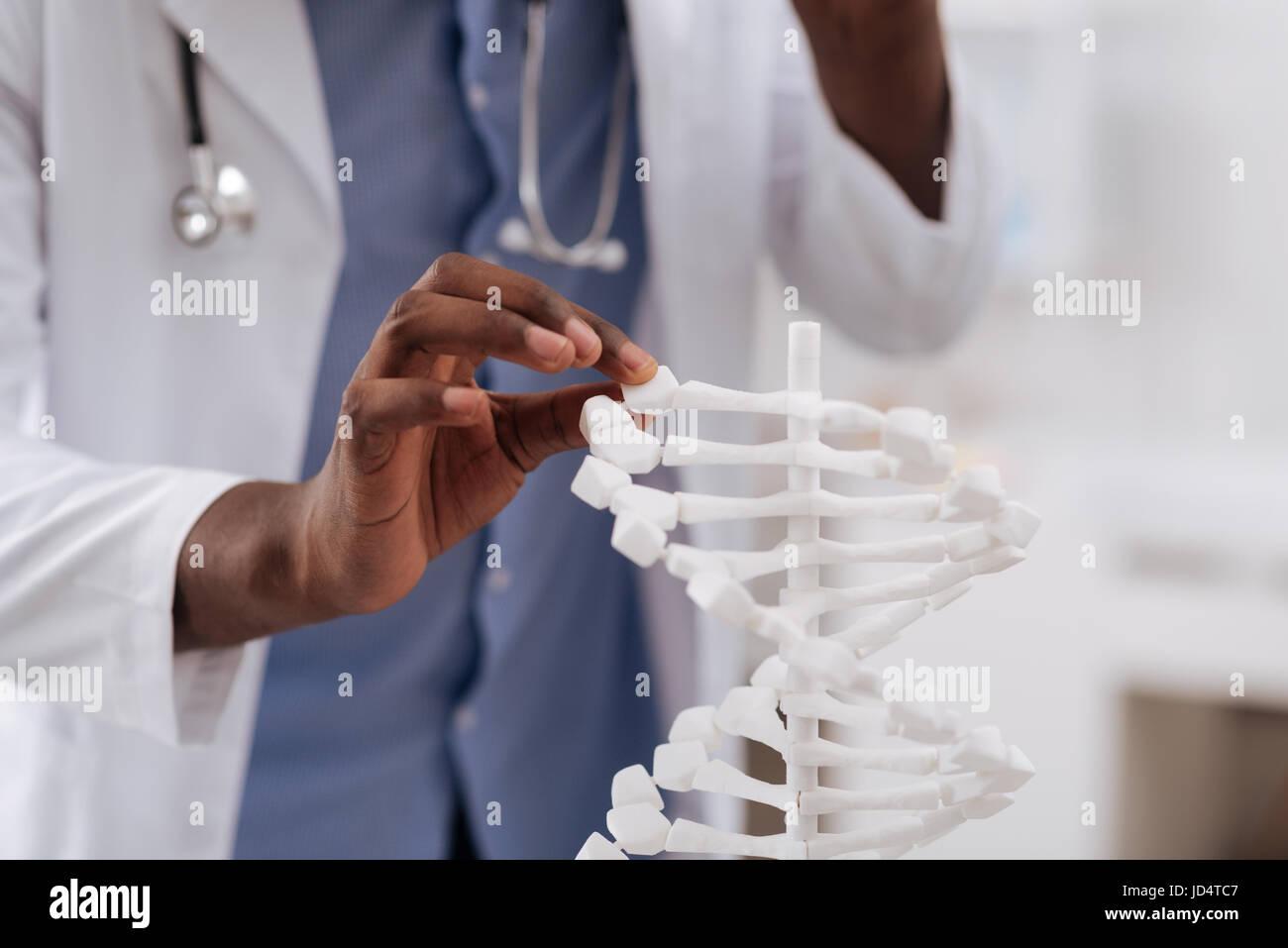 Gros plan d'une part scientifiques tenant le modèle d'ADN Banque D'Images