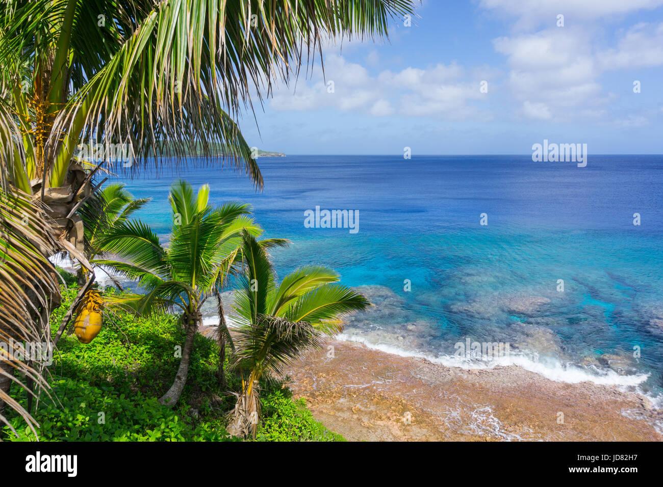 Scène tropicale de coraux dans l'eau turquoise ci-dessous palmiers et cocotiers se balançant dans breeze sur ocean horizon lointain. Banque D'Images