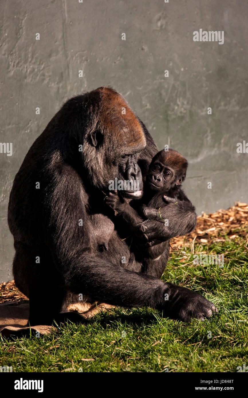 Un moment émouvant entre la mère et le bébé dans la nature Photo Stock