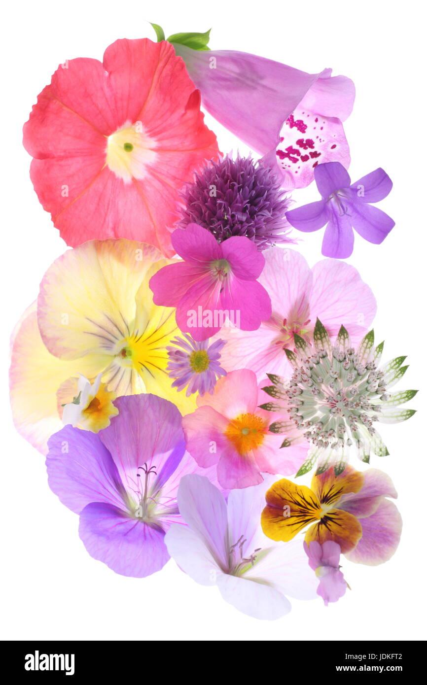 Un mélange étonnant de fleurs printemps/été recueillis auprès de mon chalet. Banque D'Images