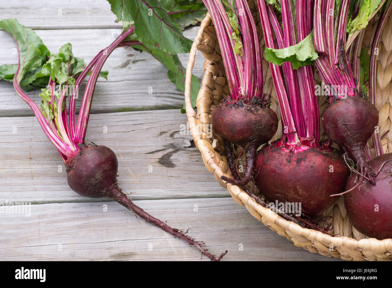Closeup-Fresh Les betteraves du jardin avec de riches couleurs rouge mis en valeur par les feuilles vertes - la Photo Stock