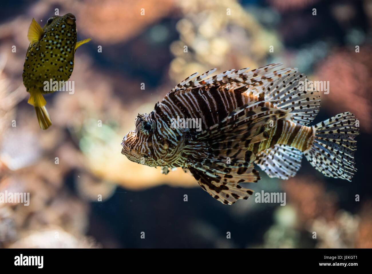poisson Banque D'Images