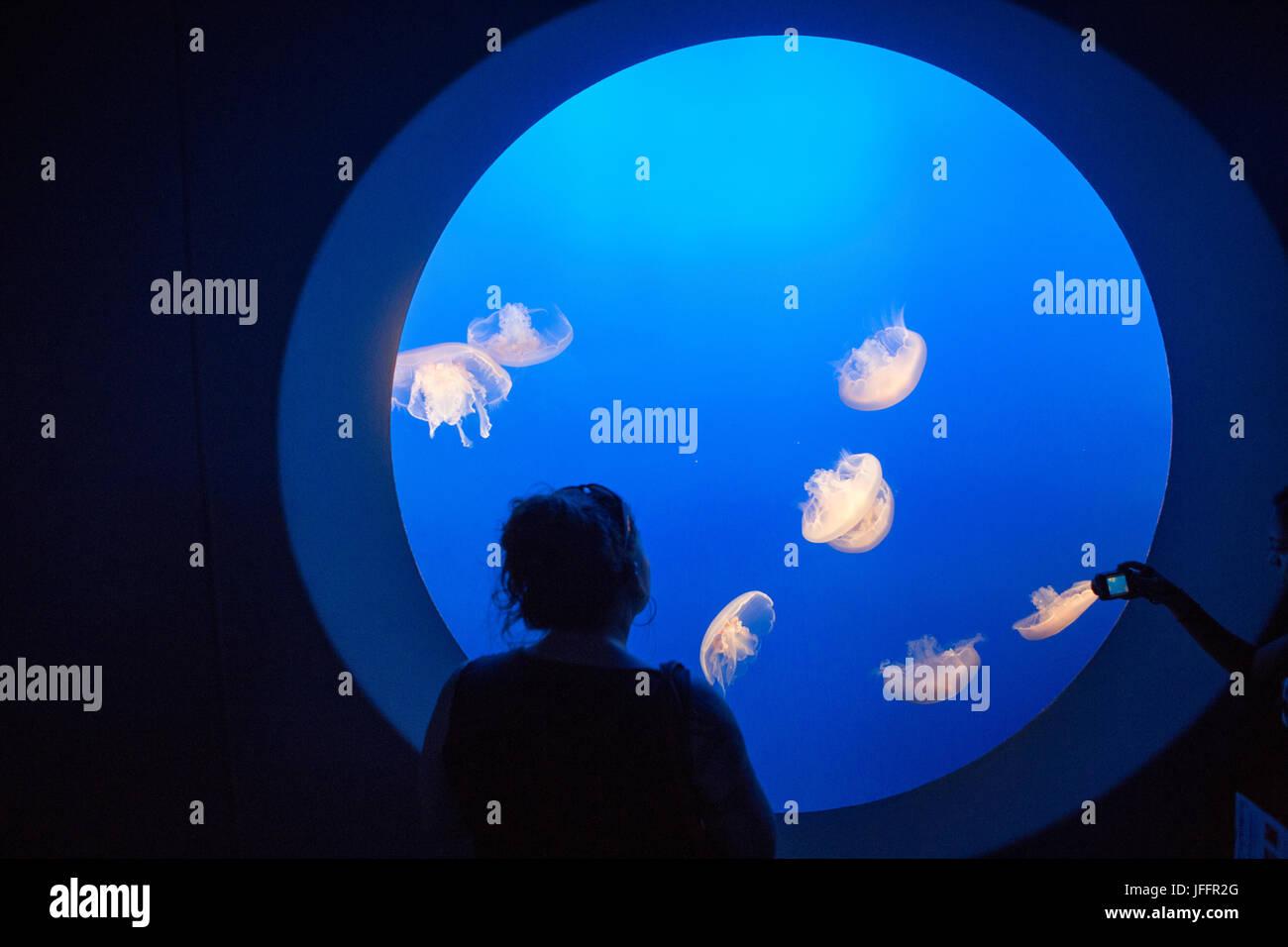 Visiteurs à l'Aquarium de Monterey Bay watch et photographier une méduse de lune de réservoir. Photo Stock