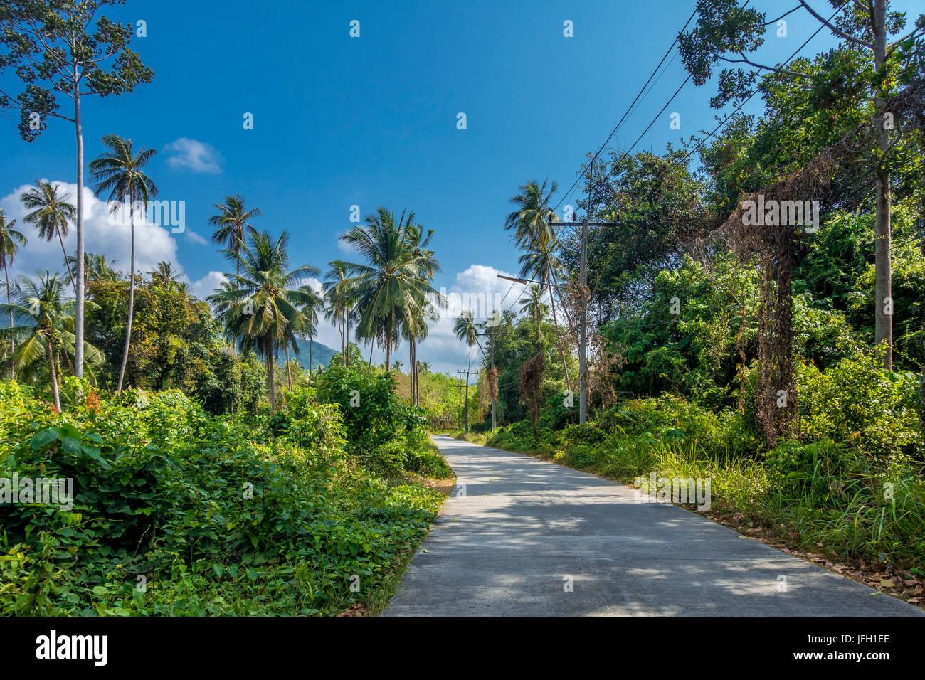 Route de campagne d'une végétation luxuriante sur Ko Samui, Thaïlande, Asie Photo Stock