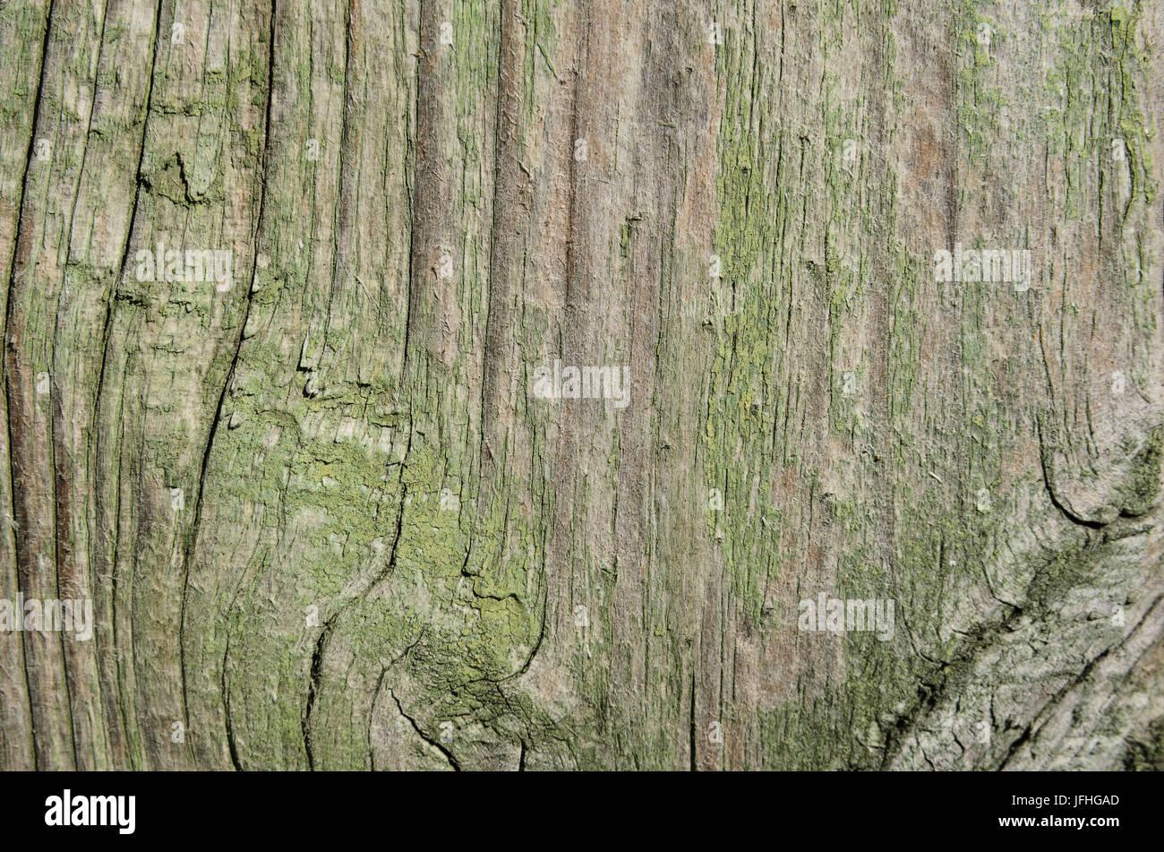 La texture d'arbre de sélection de peinture verte avec des lignes verticales avec noeuds et motifs Banque D'Images