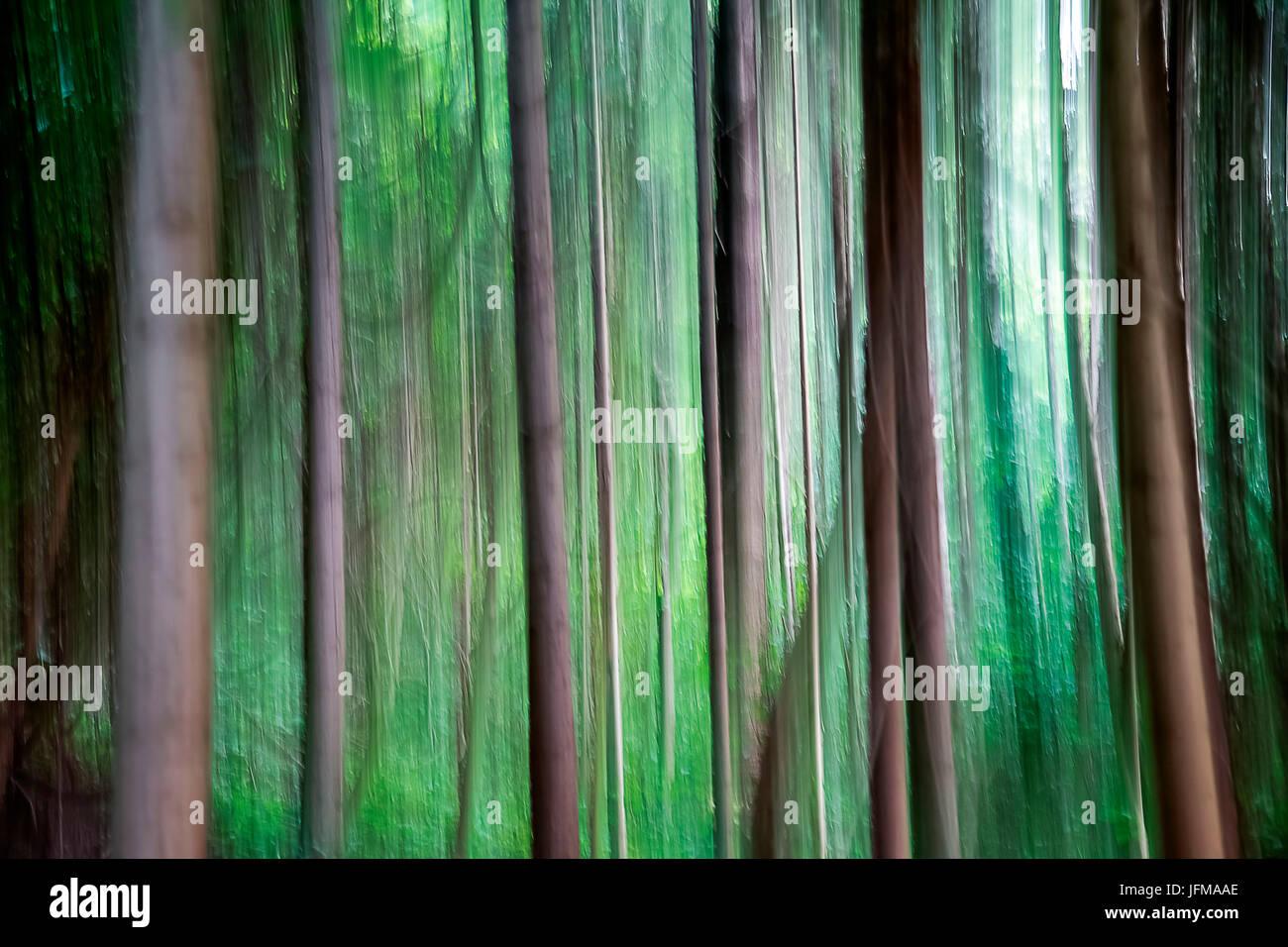 Flou artistique d'arbres, Piacenza, Emilie Romagne, italie Photo Stock