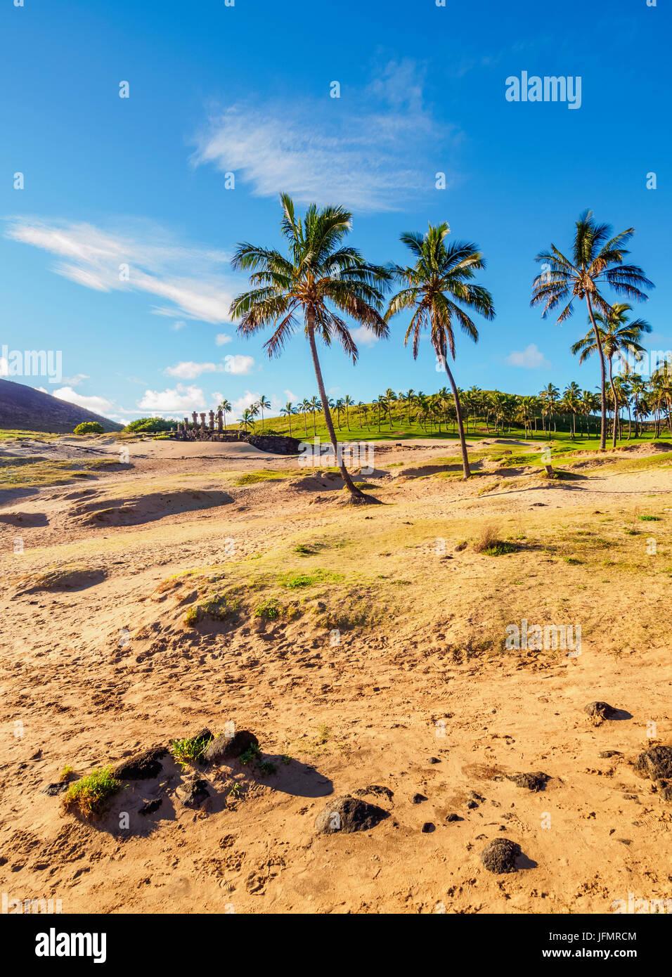 Palmiers par la plage Anakena, île de Pâques, Chili Photo Stock