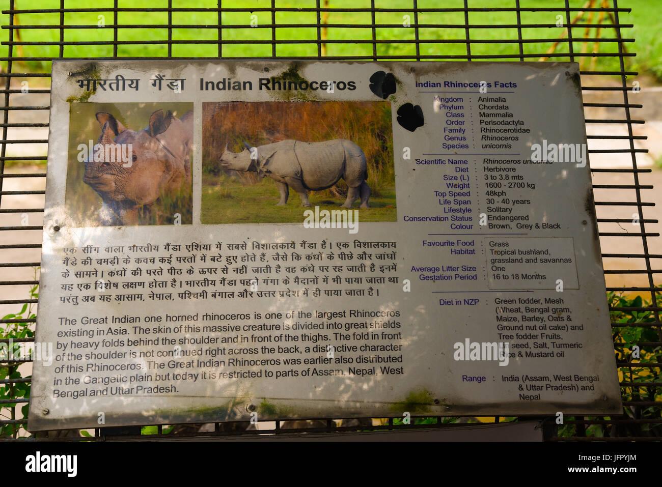 Balades sauvages rhinocéros indien dans l'air extérieur parc naturel verdoyant ou la forêt en mois de juin 2017 après la pluie avec les dernières informations sur l'image Banque D'Images