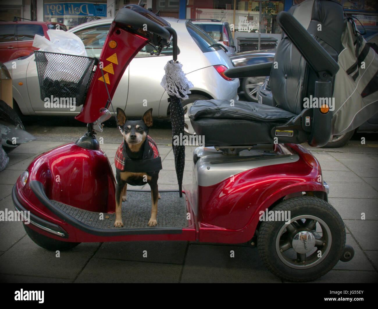 Voiture non valide avec les propri taires et chiens humour - Image voiture drole ...