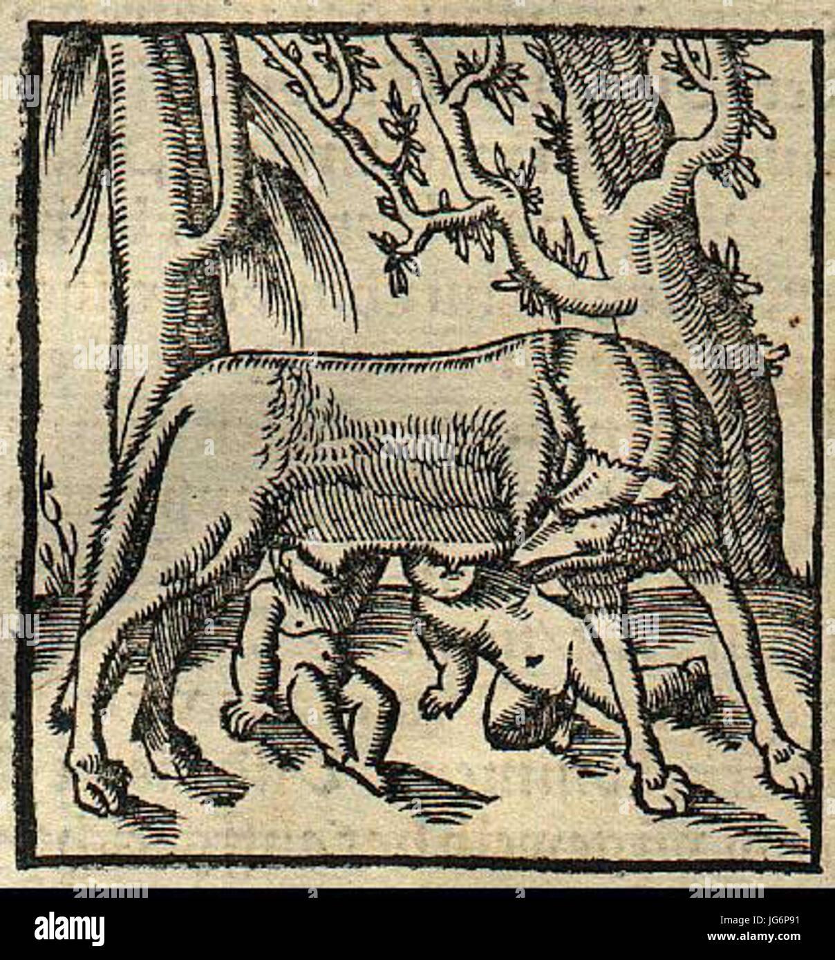 Romulus et Remus allaités par une louve 28155029 Banque D