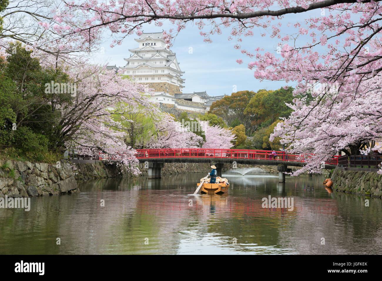 Château de Himeji avec de beaux cerisiers en fleurs au printemps saison à Agadir près d'Osaka, Photo Stock