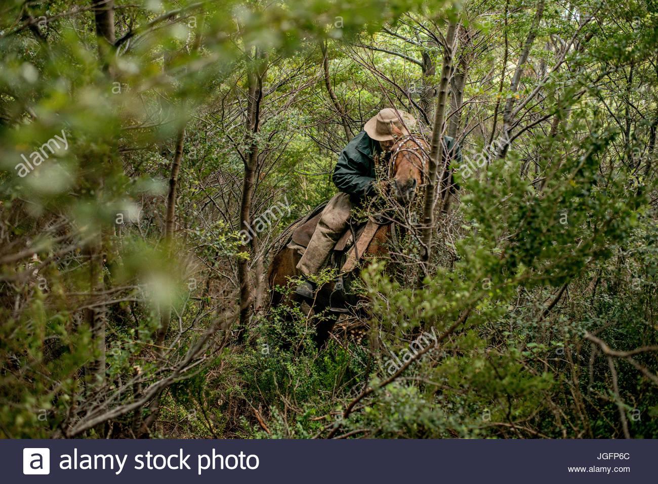Un bagualero, un cow-boy qui capture les animaux sauvages, détourne un sentier à travers la forêt Photo Stock
