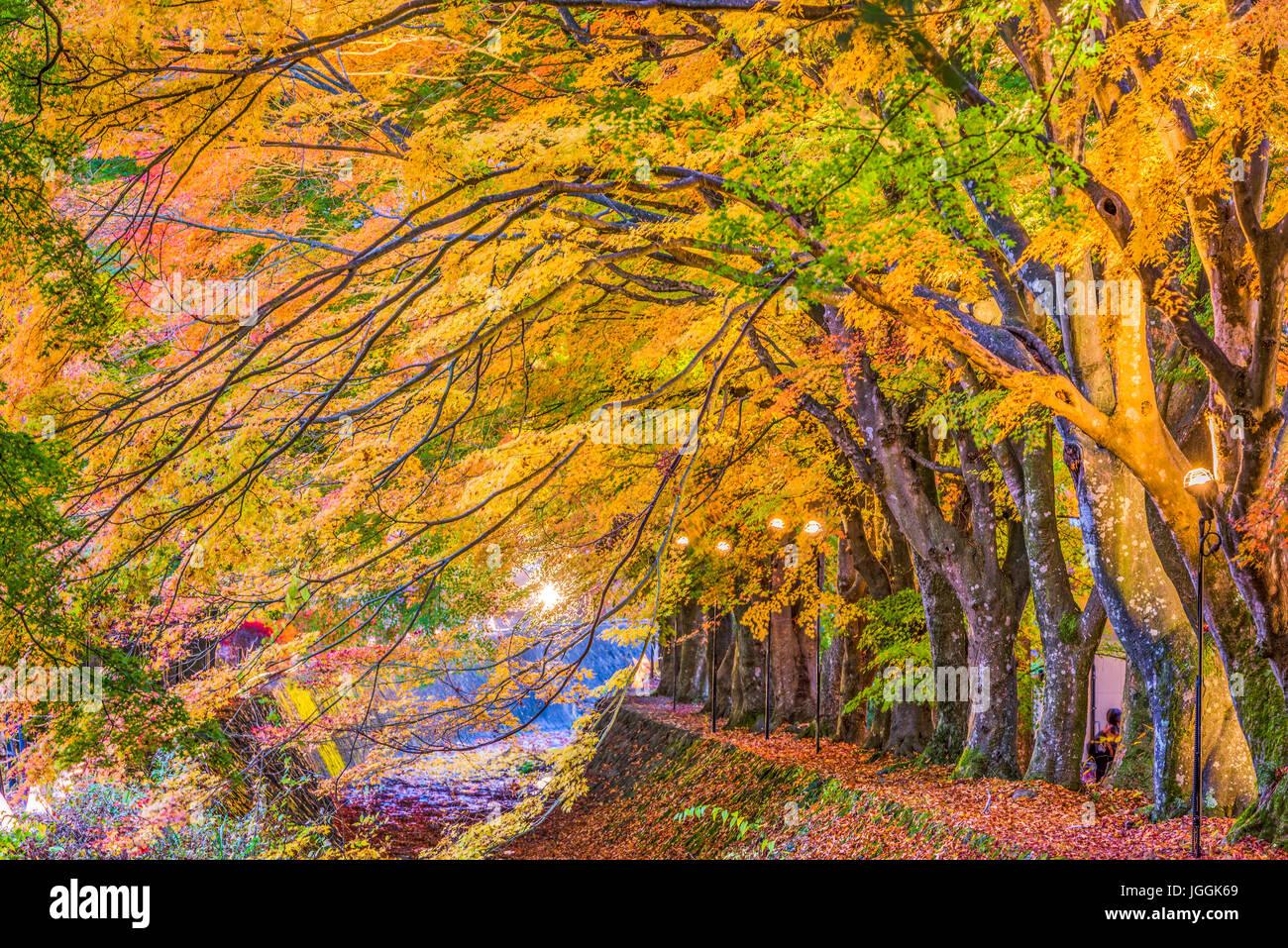 Corridor de l'érable près du lac Kawaguchi et Mt. Fuji, le Japon au cours de l'automne. Photo Stock