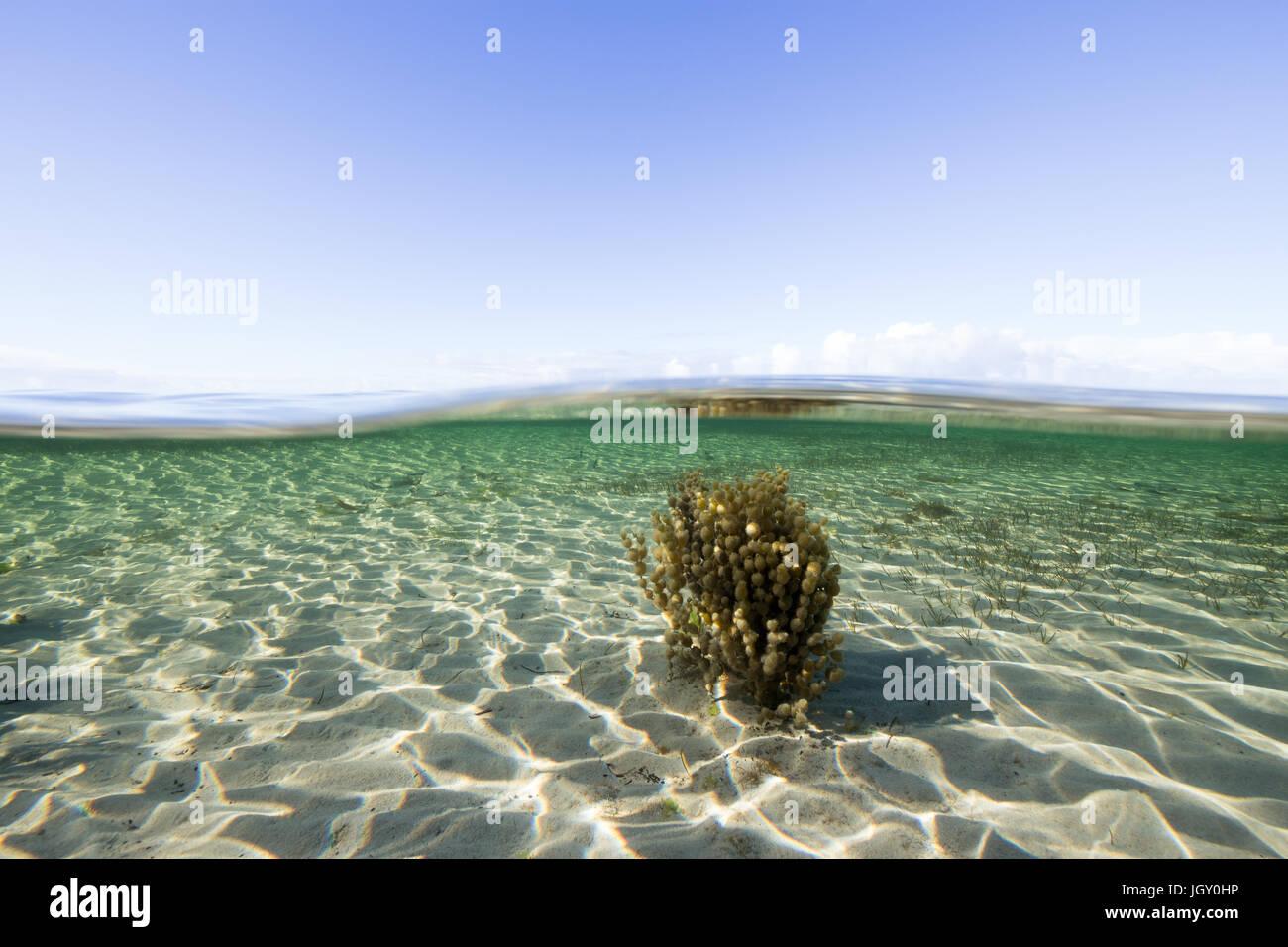 Au-dessus et sous un environnement de l'océan sur la péninsule d'Eyre, en Australie. Photo Stock