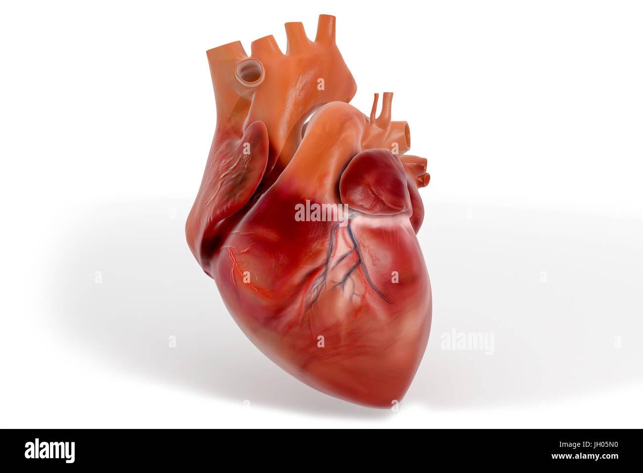 Coeur 3D avec des textures Banque D'Images