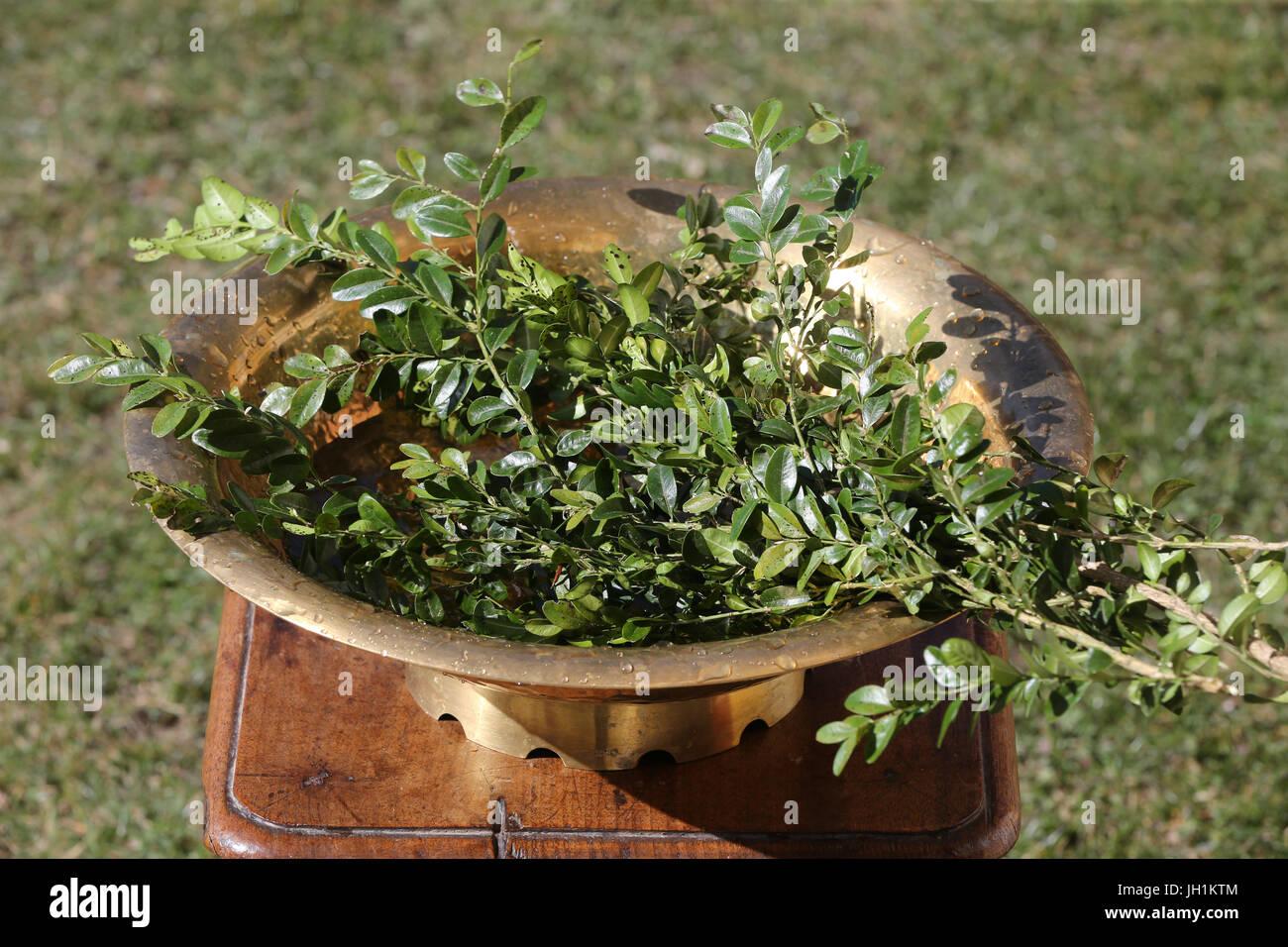 Dimanche des Rameaux la messe. Buxus. Close-up. La France. Photo Stock