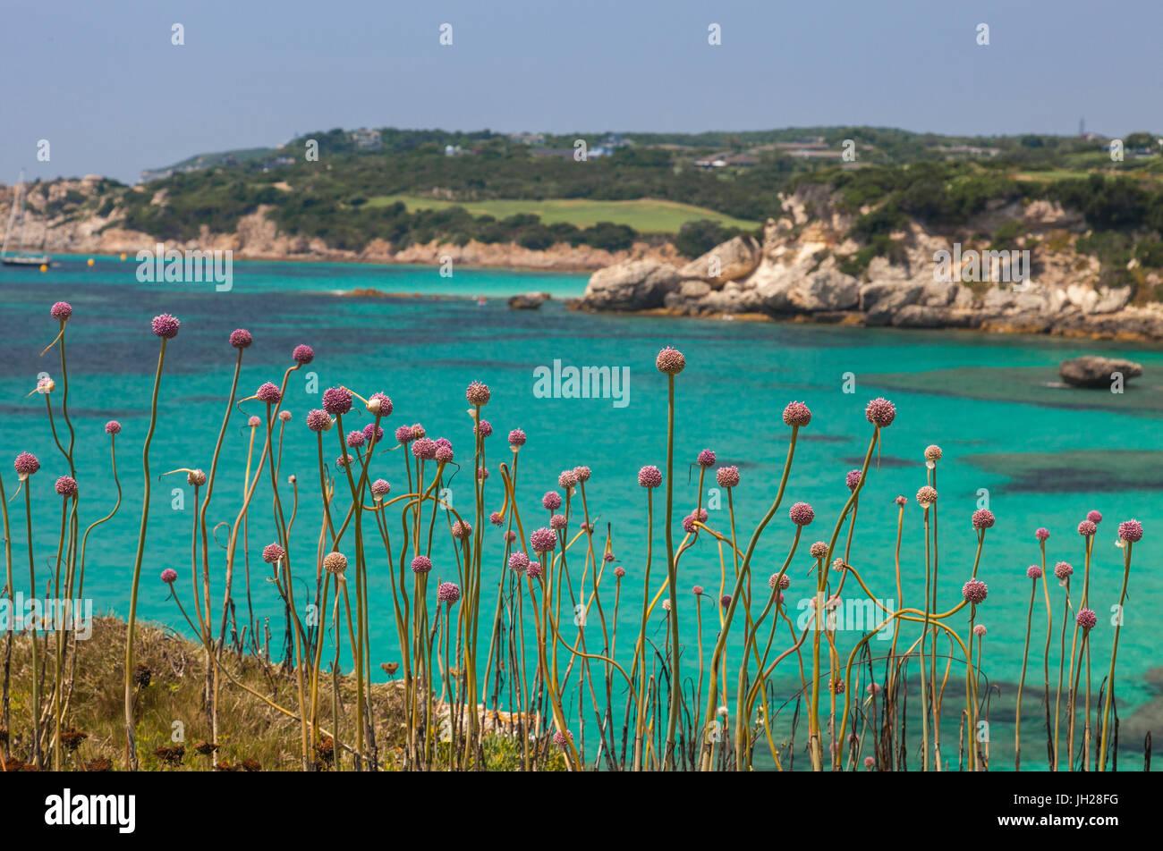Fleurs roses de la trame à l'intérieur des terres la mer turquoise en été, Sperone, Bonifacio, Photo Stock